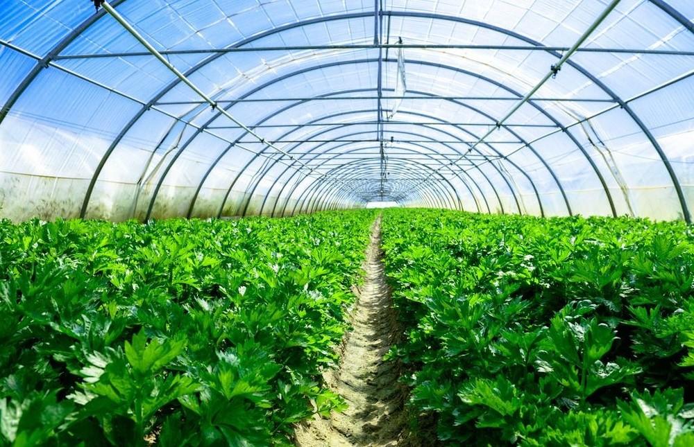 积极发展现代农业,建成国家级农业标准化示范区7000余亩、国家级蔬菜种植示范社3000亩